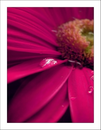 Photography in colors: Pink